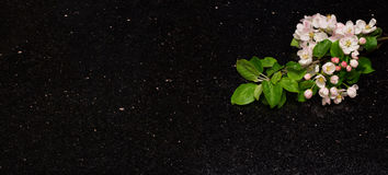 Den Apple blomningen förgrena sig på countertop för stjärnagalaxgranit Arkivfoto