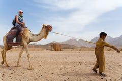 Den arabiska pojken rullar turister på en kamel Arkivbilder