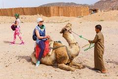 Den arabiska pojken rullar turister på en kamel Arkivbild