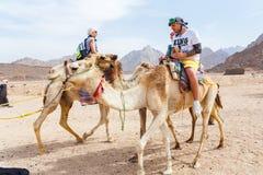 Den arabiska pojken rullar turister på en kamel Fotografering för Bildbyråer