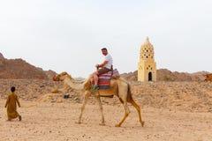 Den arabiska pojken rullar turister på en kamel Arkivfoton