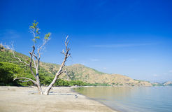 Areia brancastrand nära dili East Timor Arkivfoton