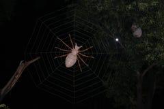 Den Artifitial spindeln och förtjänar Arkivfoto