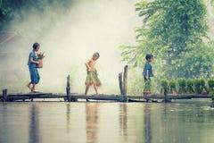 Den asiatiska barnbonden på ris korsar den wood bron för det fullvuxet i risfältfält royaltyfri fotografi