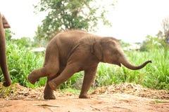 Den asiatiska elefanten behandla som ett barn dans är joyfully Royaltyfri Bild