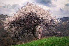 Den asiatiska flickan går på våren utomhus över ett grönt fält under kronan av ett blommande löst aprikosträd arkivfoton