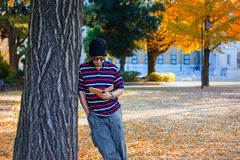 Den asiatiska mannen står under ett gult Ginkgoträd i höst arkivbild