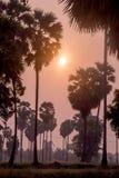 Den asiatiska palmyraen gömma i handflatan, palmyraen gömma i handflatan, Brab gömma i handflatan, tvivel gömma i handflatan, fan Fotografering för Bildbyråer