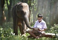 Den asiatiska studentpojken läste böcker med hans elefanter Arkivbilder