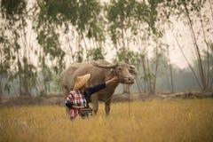 Den asiatiska unga damen sitter bredvid buffel och rymmer radion Arkivfoto