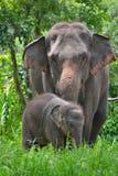 Den Asien elefanten fostrar och behandla som ett barn i skog Arkivfoto