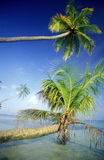DEN ASIEN INDISKA OCEANEN TROPISKA MALDIVERNA GÖMMA I HANDFLATAN Fotografering för Bildbyråer
