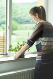 Den attraktiva flickan tar omsorg av en växt i kruka Royaltyfria Foton