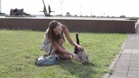 Den attraktiva unga kvinnan som klappar katten parkerar in stock video