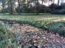 Den Autumn Fall floden parkerar kulöra sidor Arkivfoto