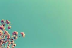 Den avlövade trädfilialen med rosa färger blommar mot bakgrund för blå himmel, den tappning tonade bilden arkivfoton