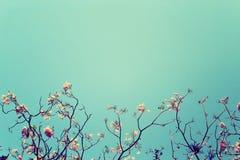 Den avlövade trädfilialen med rosa färger blommar mot bakgrund för blå himmel, den tappning tonade bilden arkivbild