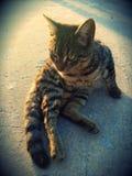 Den bästa katten Royaltyfri Fotografi