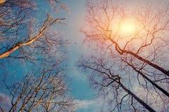 Den bästa treen beskådar Abstrakt begrepp- och naturbakgrund Arkivbild
