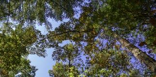 den Bäumen im Südberg oben betrachten Stockbild