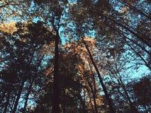 den Bäumen oben betrachten Lizenzfreies Stockfoto