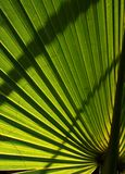 den bakbelysta leafen gömma i handflatan Royaltyfria Bilder