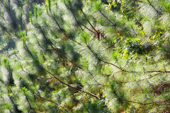 den bakgrundsbaikal laken sörjer treen Arkivfoto