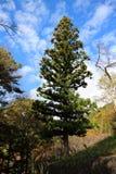 den bakgrundsbaikal laken sörjer treen Arkivbild
