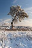 den bakgrundsbaikal laken sörjer treen Fotografering för Bildbyråer