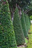 den bakgrundsbaikal laken sörjer treen Royaltyfria Bilder