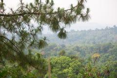 den bakgrundsbaikal laken sörjer treen arkivfoton