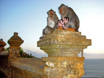 Den Bali apamodern med behandla som ett barn Royaltyfri Foto