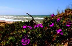 den baltiska stranden clouds det våta havet för sanden för kustlinjepalangareflexionen Royaltyfri Bild