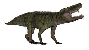 Den Batrachotomus dinosaurien som vrålar -3D, framför stock illustrationer