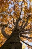 Den Baum oben schauen Stockbilder