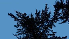 den Baumasten oben betrachten dunkel auf blauem Himmel stock video footage