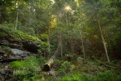 Den bayerska skogen Arkivbilder