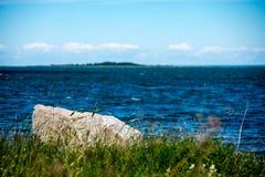Den bekväma stranden av det baltiska havet med vaggar och grön vegetat Royaltyfria Foton
