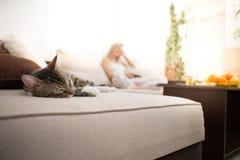 Den bekymmerslösa katten sover fridfullt på soffan arkivbilder