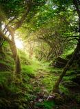 Den berömda felika dalgången som lokaliseras i kullarna ovanför byn av Uig på ön av Skye i Skottland Royaltyfria Bilder