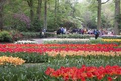 Den berömda holländska blomman parkerar Royaltyfria Bilder