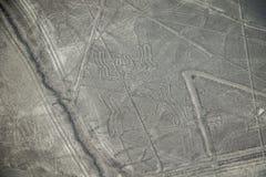 Den berömda sikten av spindelbilden i Nazca, Peru Royaltyfri Foto