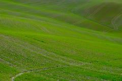 Den berömda Tuscan Kreta Senesi Royaltyfri Foto