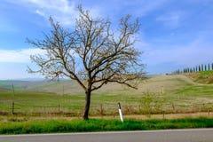 Den berömda Tuscan Kreta Senesi Royaltyfria Bilder