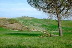 Den berömda Tuscan Kreta Senesi Royaltyfri Fotografi