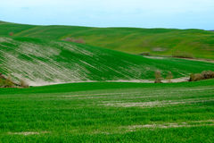 Den berömda Tuscan Kreta Senesi Royaltyfri Bild