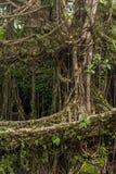 Den berömda uppehället för den dubbla däckaren rotar bron nära den Nongriat byn, Cherrapunjee, Meghalaya, Indien Royaltyfria Bilder