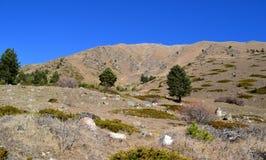 In den Bergen des Kaukasus Stockbilder