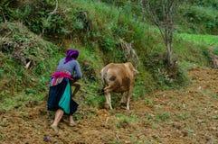 Den bergiga bonden plöjer fältet Royaltyfri Bild