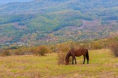 Den betande hästen på ett sommarberg betar royaltyfri fotografi